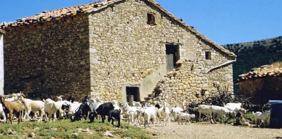 El ganado y los pastos: el secreto mejor guardado de los quesos valencianos.